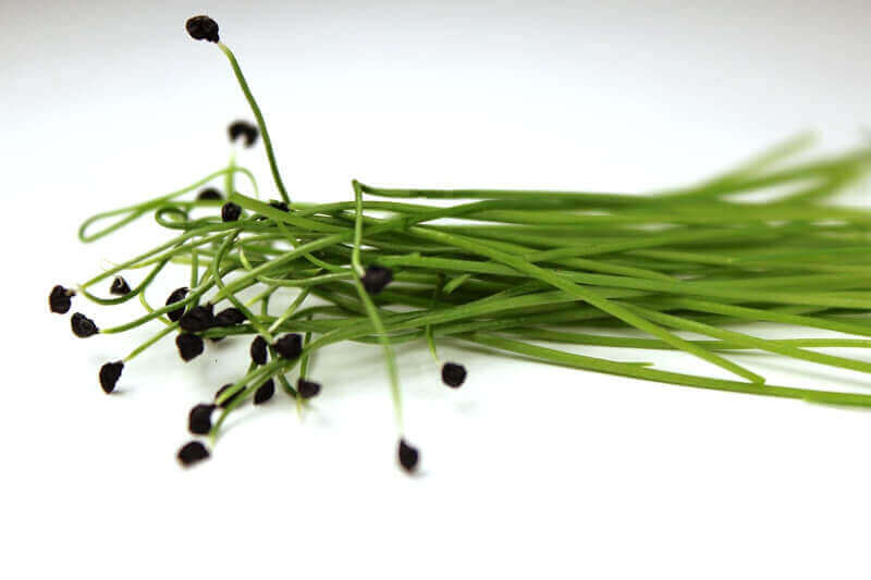 leek microgreen seeds