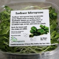 sunflower microgreens in clamshells