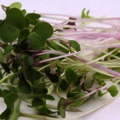 mighty microgreen salad mix seeds