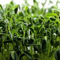 speckled pea shoots