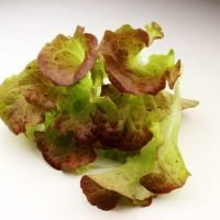 ruby red leaf lettuce cut