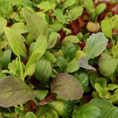 mesclun salad mix seeds