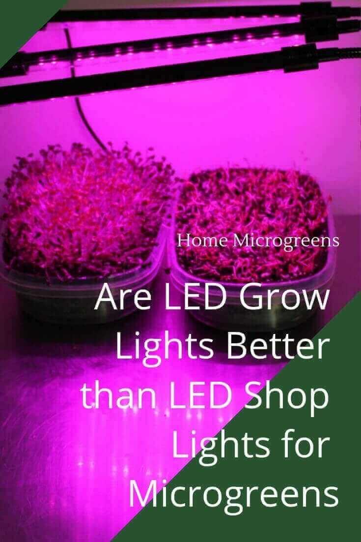 Do LED grow lights work?