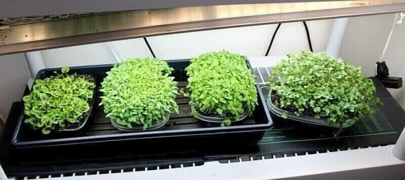 Vivosun seedling heating mat