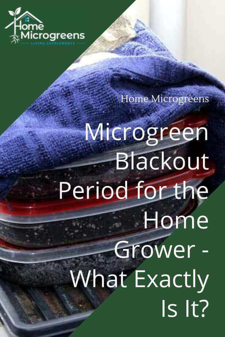 keeping microgreens under blackout