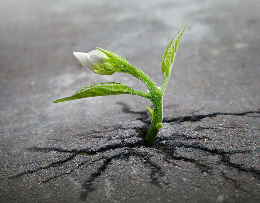 seedling growing through pavement