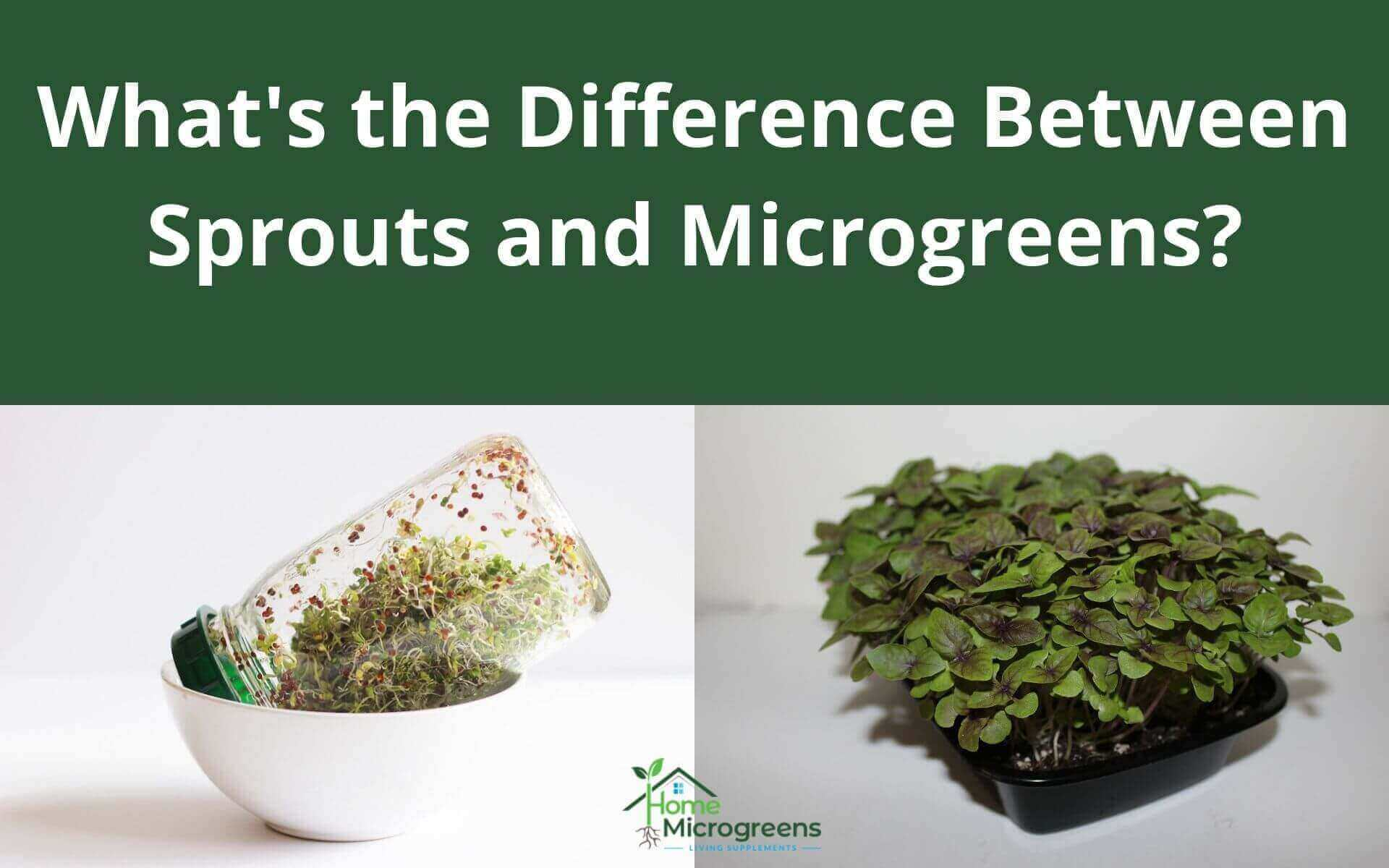 what is the difference between sprouts and microgreens