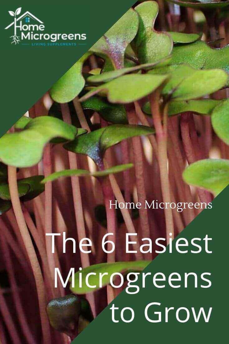 the six easiest microgreens to grow