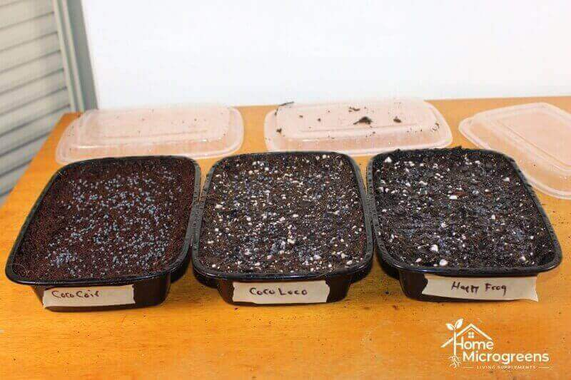 microgreens planted in three different soil media