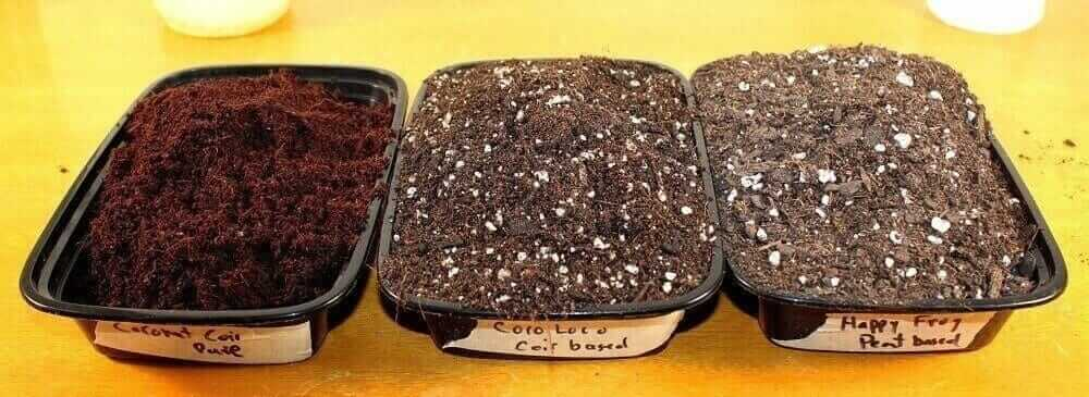 soil for microgreens