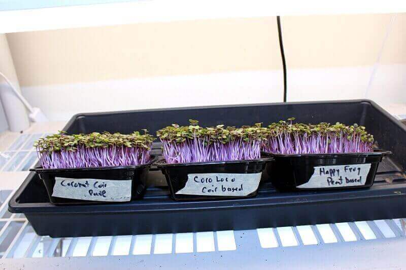 Side-view of the soil for microgreens test on Day 5