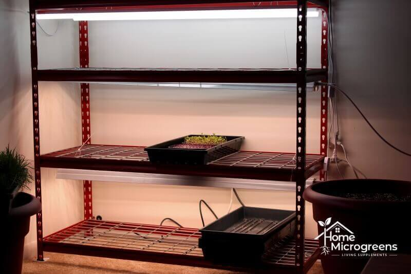 Recommended lights for microgreens