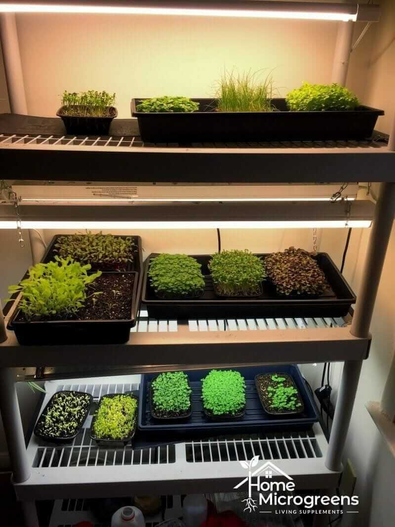 LED lights for microgreens
