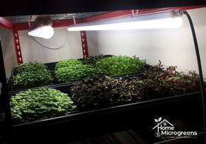 led lights for microgreens