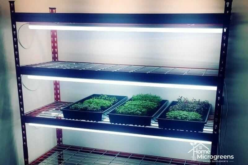 recommend LED lights for microgreen