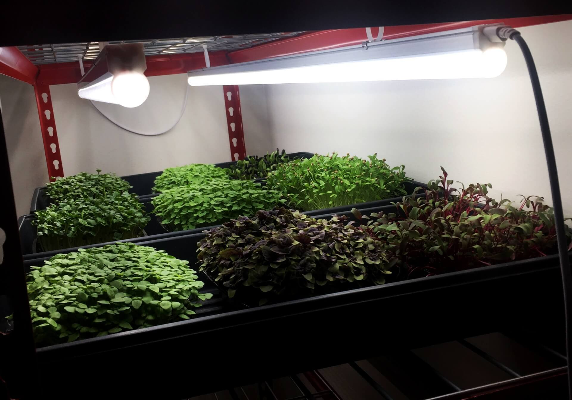 Microgreens lights