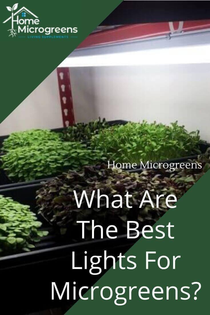 best lights for microgreens