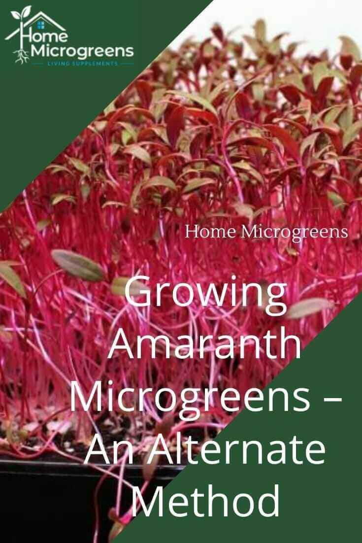 how to grow amaranth microgreens