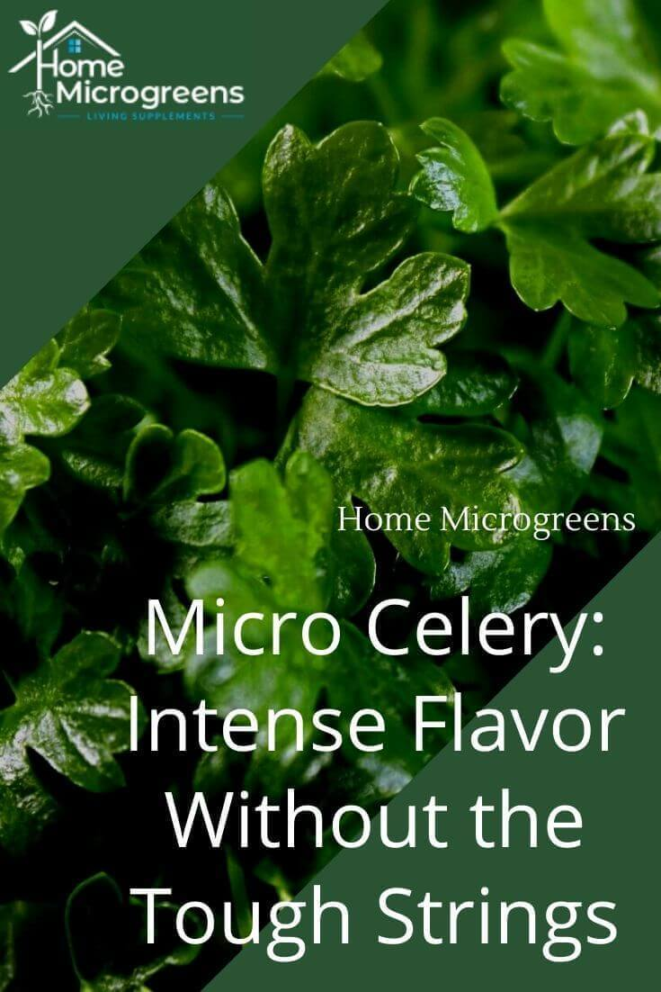 celery microgreens pin