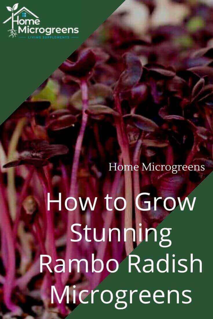 rambo radish pin