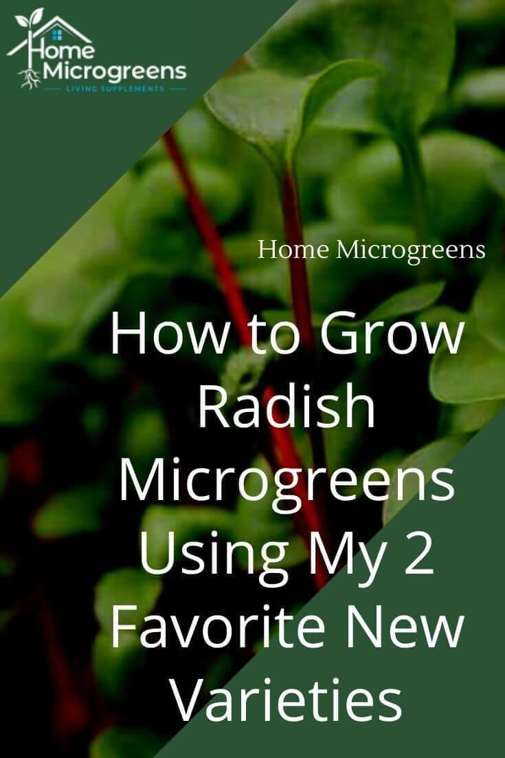 how to grow radish microgreens pin