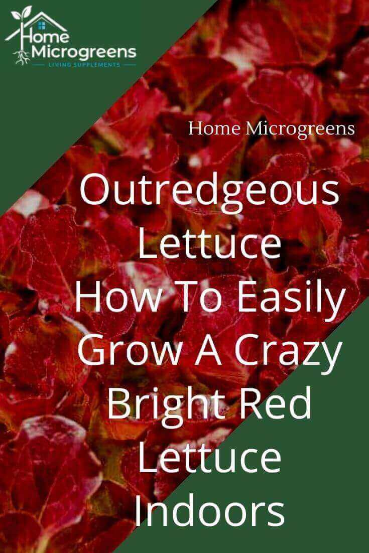 pin for outredgeous lettuce