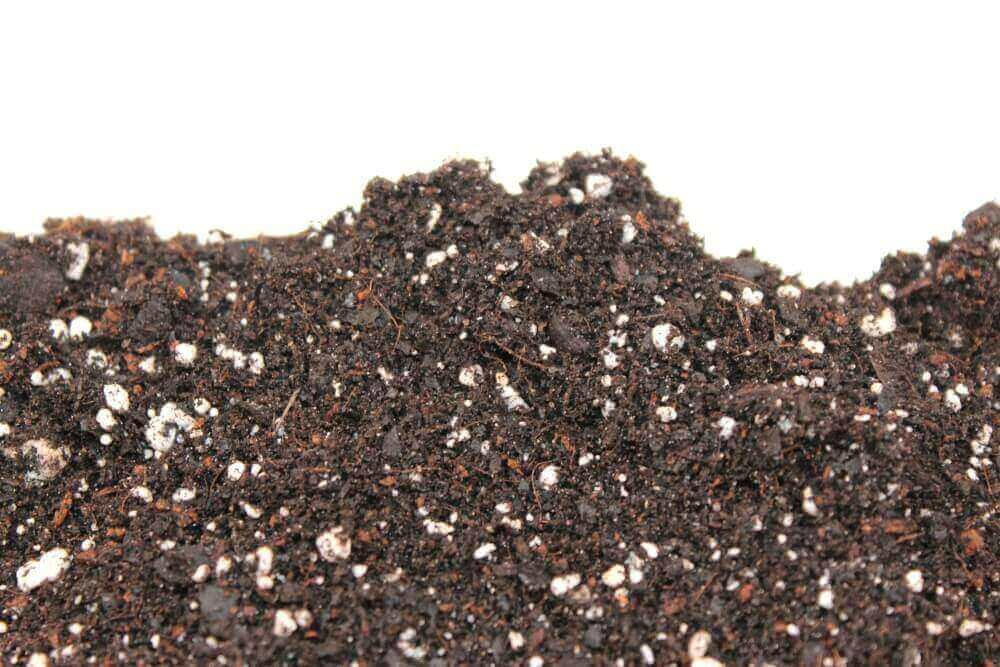home microgreens potting mix