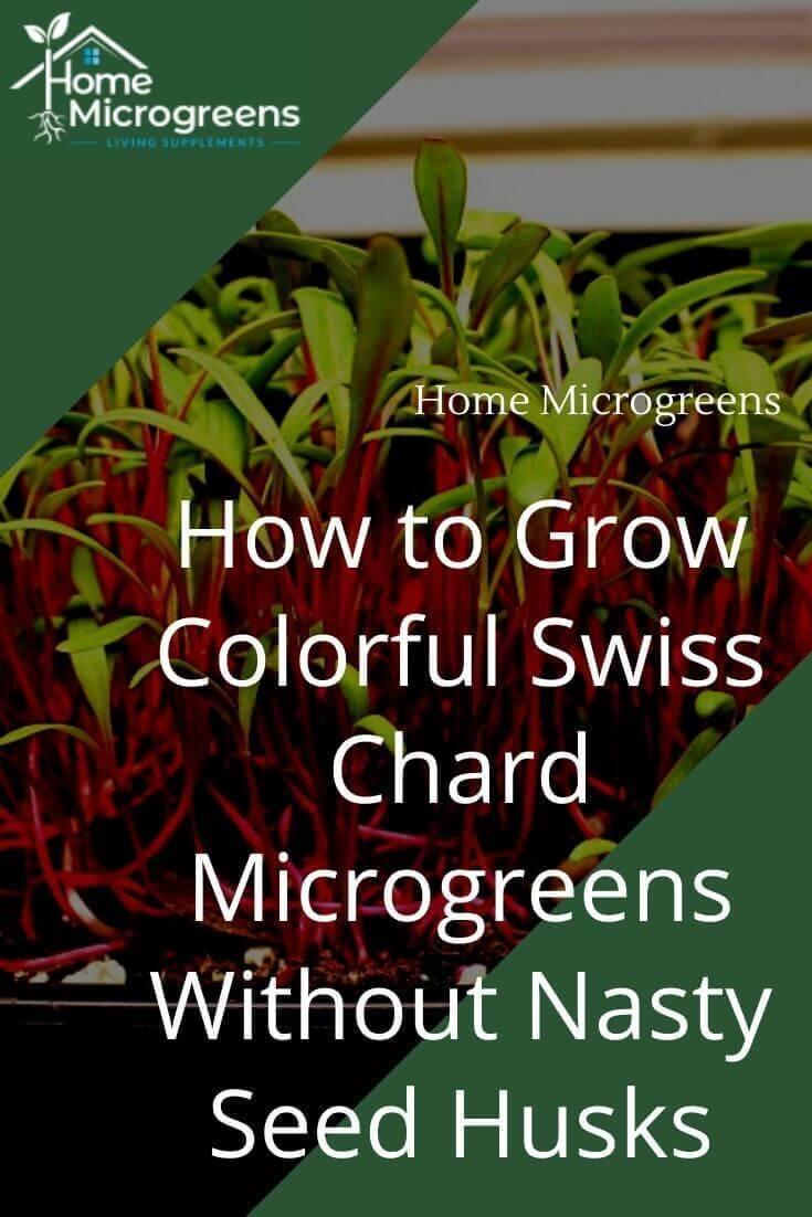 swiss chard microgreens