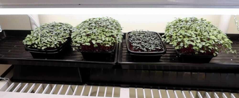 why I now use a liquid organic fertilizer