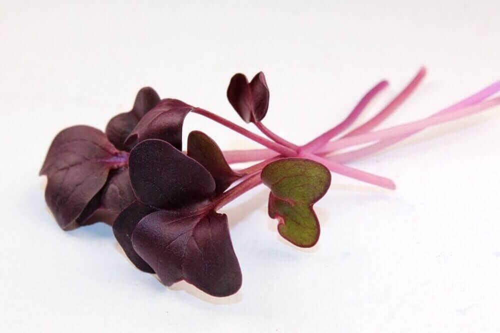 nutritional value of radish microgreens