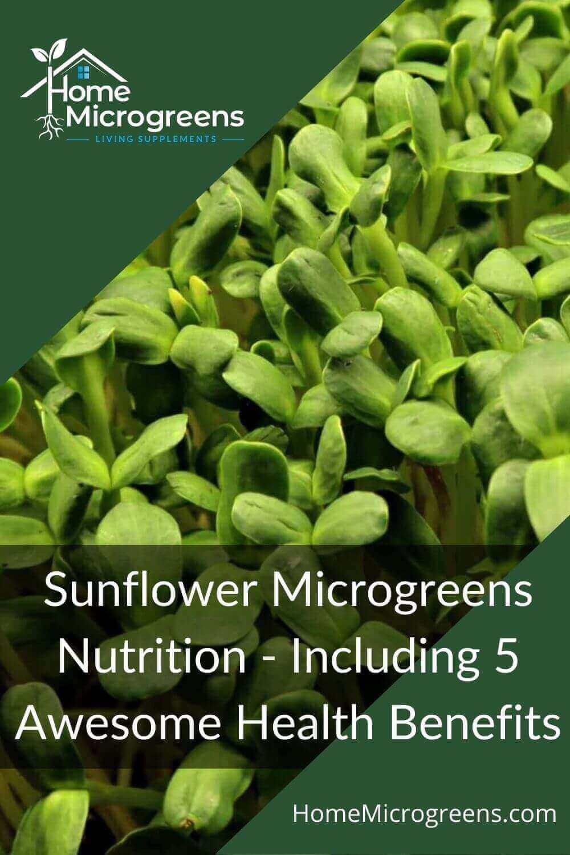 sunflower microgreens nutrition pinterest