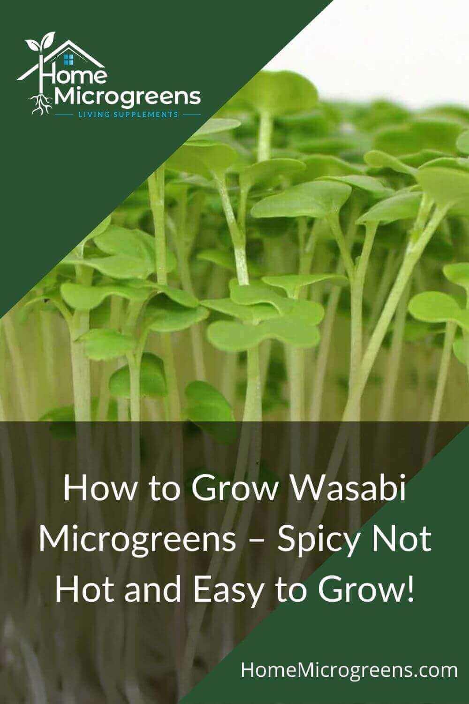 wasabi microgreen article