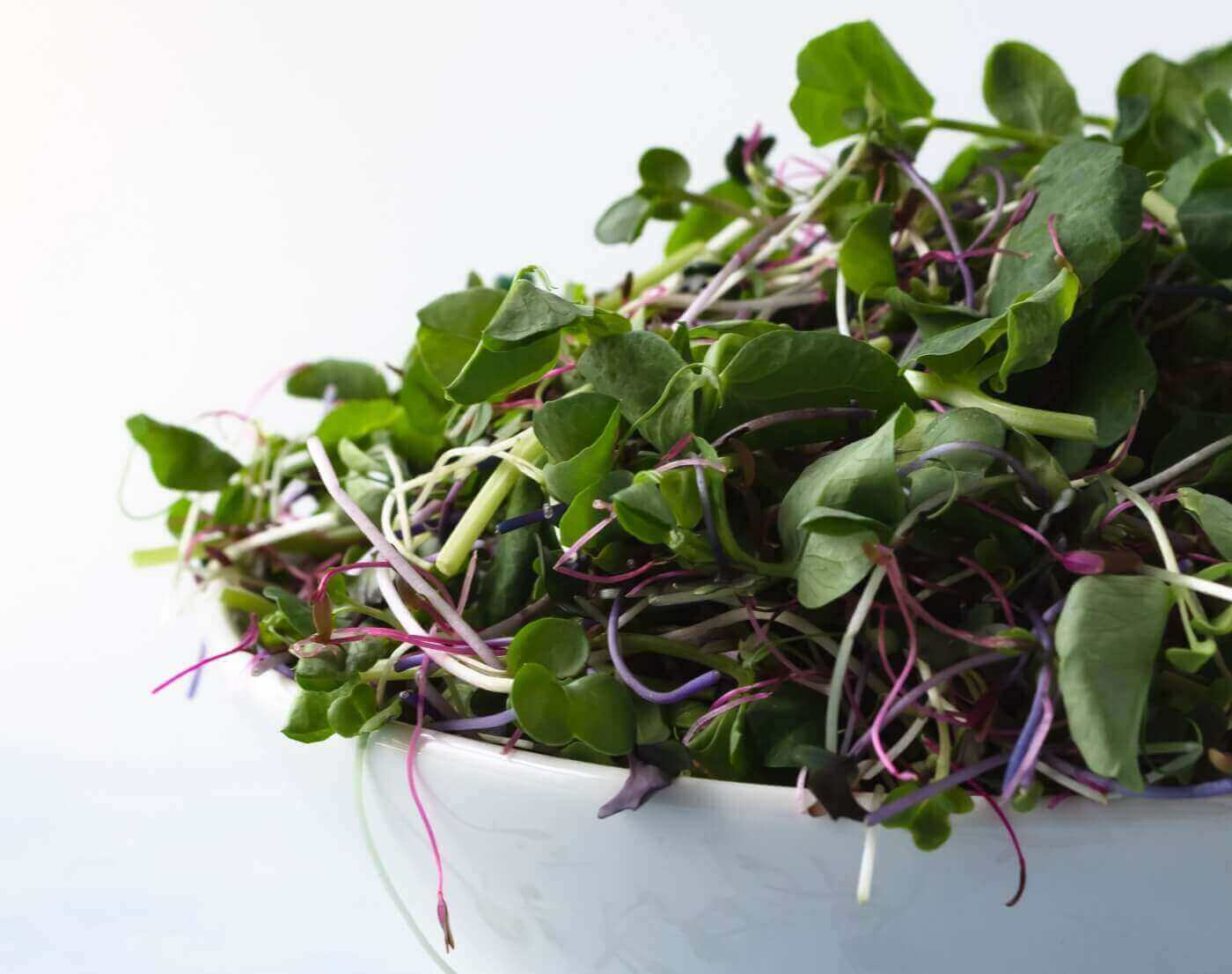 microgreen nutrition and health benefit