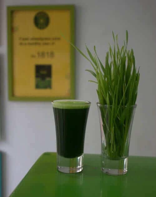 wheat grass drink